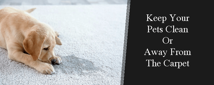 Keep your Pets Clean or Away from The Carpet